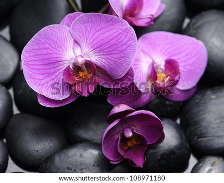Branch pink orchid lying down with pebbles