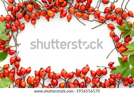 branch Rosehips Dog rose, red Rosa canina hips - Medicinal plants herbs composition to enhance immunity and vitamins  Stock photo ©