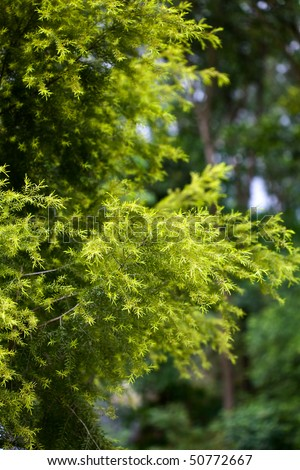 stock-photo-branch-small-leaf-with-spring-buds-50772667.jpg