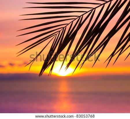 Branch Sunset Bliss