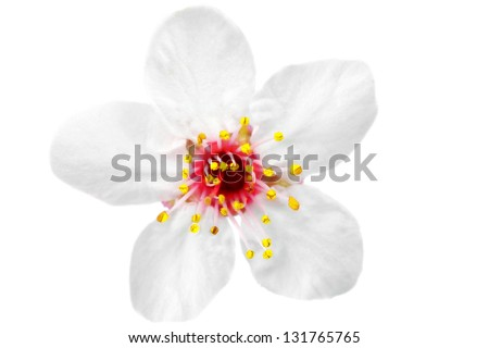 Branch with blossoms Isolated on white background