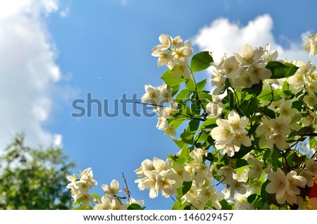branch with flowers against of sunlight on the sky background