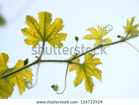 branch with fresh  leaves