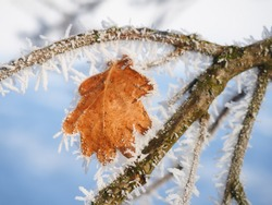 branch with frozen leaf and berry and snow