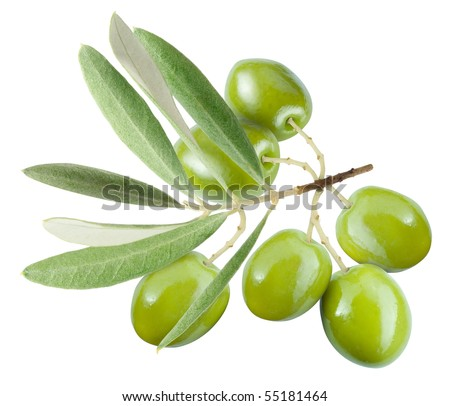 Branch with green olives isolated on white