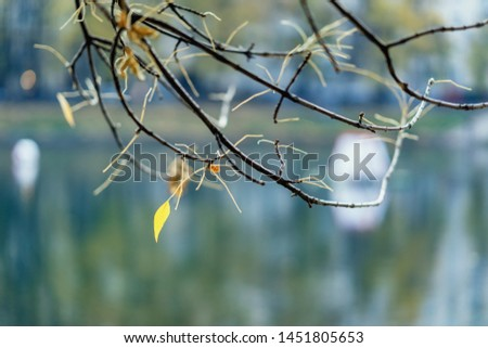 Branch with last autumn leaves on water background. Selective scenic background. Fall season #1451805653