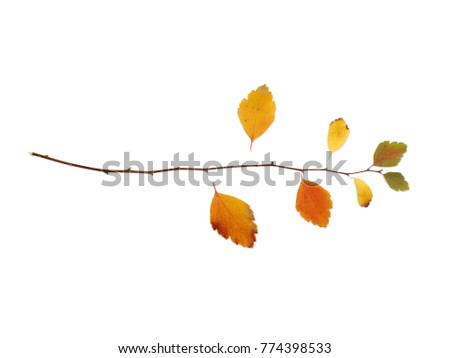 Branch with leaves lies horizontally on a white isolated background #774398533