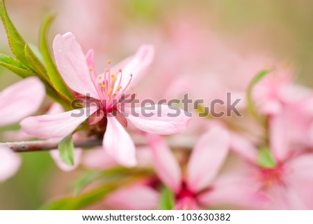 Branch with pink flowers spring