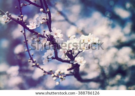Branch with white spring blossoms - Shutterstock ID 388786126