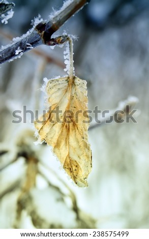 Branch with withered leaves are covered with white frost. Abstract background