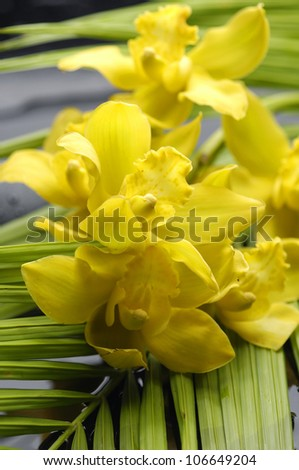 branch yellow orchid with palm leaf
