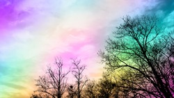 Branches against colorful sky background. Trees silhouette against colorful sky background. Surreal abstract. Rainbow abstract background. Twilight sky backdrop. Twilight clouds. Twilight colors.