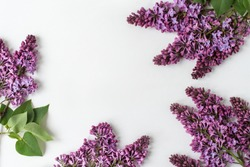 Branches and flowers of lilac, violet color, on a white background. Creative flat lay, frame for text. Minimalistic design.  Panoramic banner background with copy space