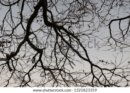 Branches, branches, and more branches #1325823359