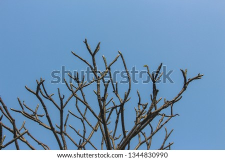 Branches, branches, branches, blue sky #1344830990
