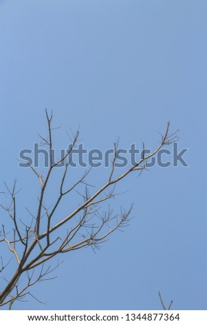 Branches, branches, branches, blue sky #1344877364