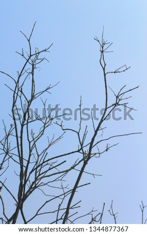 Branches, branches, branches, blue sky #1344877367