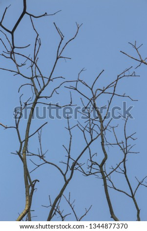 Branches, branches, branches, blue sky #1344877370