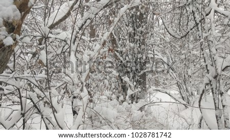 branches covered in snow after...