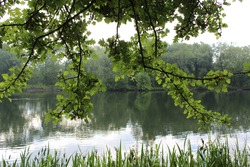 Branches drooping over a lake