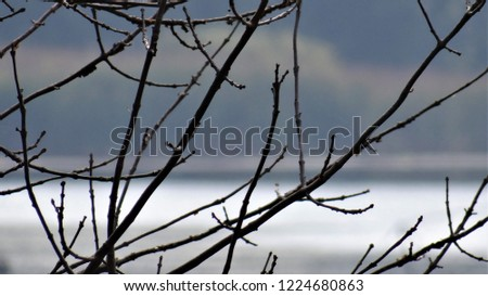 Branches in the foreground of a natural marsh habitat in Northern Illinois. #1224680863