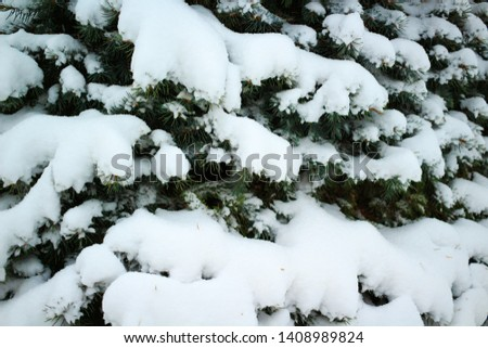 Branches of a fir-tree are covered with hoarfrost in the winter #1408989824