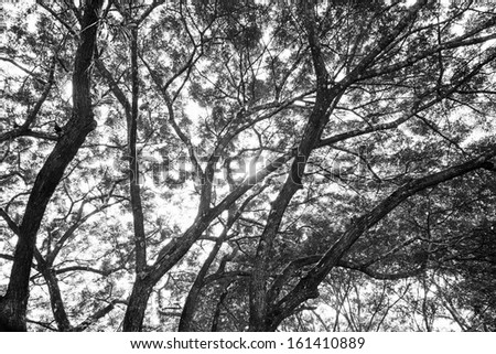 branches of a tree black and white #161410889