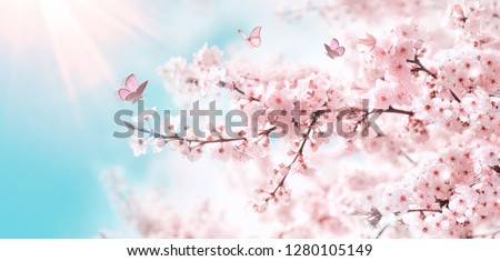 Branches of blossoming cherry against background of blue sky and fluttering butterflies in spring on nature outdoors. Pink sakura flowers, dreamy romantic artistic image of spring nature, copy space. #1280105149