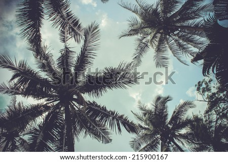 branches of coconut palms under blue sky #215900167