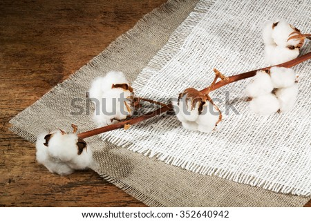 branches of cotton, fiber on a wooden background.