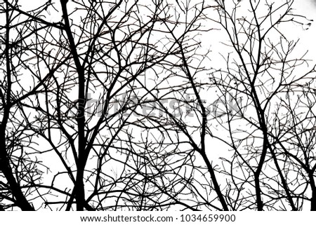Branches of dry trees isolated on white background #1034659900