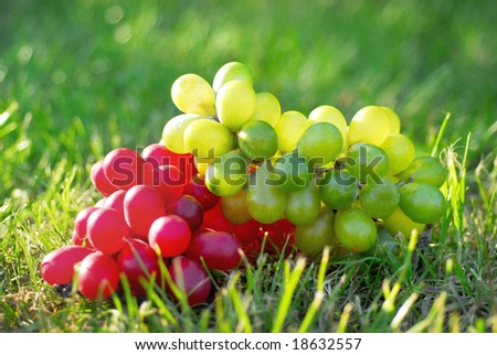 branches of grape in different colours - stock photo