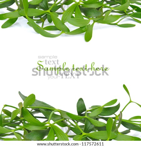 Branches of mistletoe (Viscum album) are on a white background