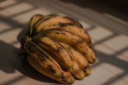 Branches of ripe banana with dark spot are heating in the sunlight for ripe more.Ripe yellow bananas fruits, bunch of ripe bananas with dark spots