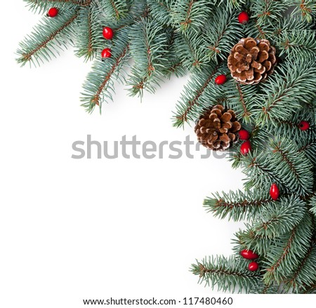 Branches of silver spruce with cones and briar on white background. Copy space