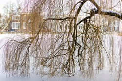 Branches of winter barren tree leaning over the frozen over canal lit up by sunlight with mansions in the background