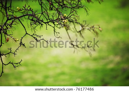 branches on a background of grass - stock photo