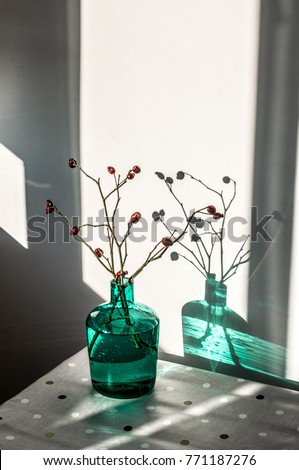 Stock Photo Branches with briar berries and their shadow in a turquoise glass vase with water on a table with a tablecloth in a pattern of peas on a sunny day top view