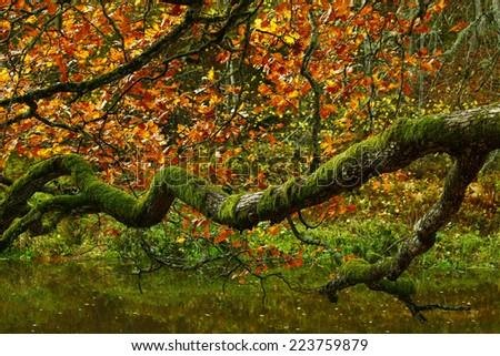 Branching autumn tree branch