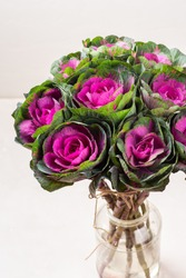Brassica decorative cabbage for floristry in a bouquet on a light background.