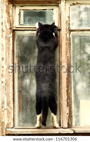 brazen cat steals food through the window, the robber apartments, cat thief