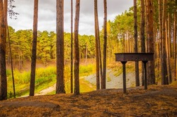 brazier (chargrill) standing alone in the pine forest.  Autumn park. Fallen leaves