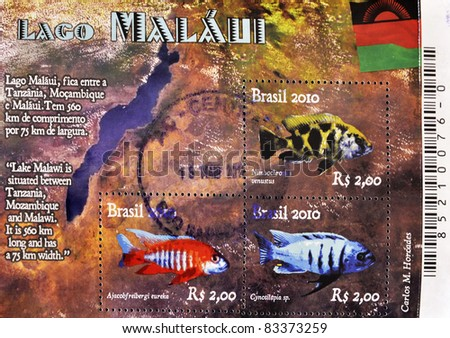 BRAZIL - CIRCA 2010:  A stamp printed in Brazil showing different fishes of Lake Malawi, serie, circa 2010