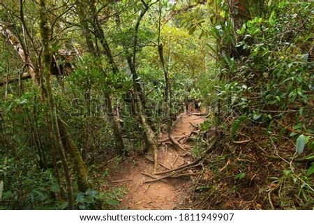 Brazil nature. Jungle flora in Serra dos Orgaos National Park. Mata Atlantica (Atlantic Rainforest). Zdjęcia stock ©