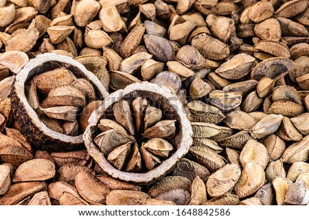 "Brazil nuts, export product from the Amazon. Brazil nuts are called ""Brazil nuts"" in Latin America. Used in chocolates, breads and other foods of Brazilian cuisine, northern Brazil."