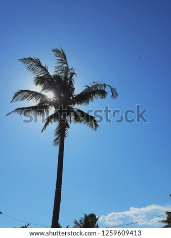 Brazil, Rio de Janeiro, Casimiro de Abreu. coconut image with blue sky and lots of space for post production texts and texts. #1259609413