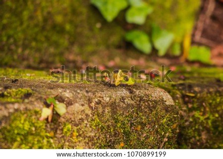 Brazil, Rio Grande do Sul, Gramado, Nature Ants Carrying Leaf Piece #1070899199