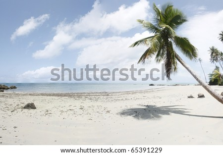 Brazilian ocean beach with a coco palm, Bahia