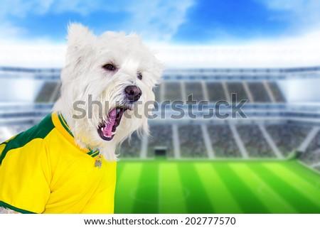 Brazilian west highland white terrier screaming at stadium