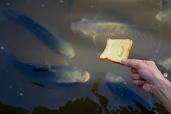Bread for fish, it on hand for feeding to fish in pond, people relaxing by travel in river and feeding food for many fish in river